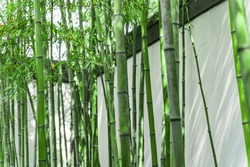 Bamboo forest in a Chinese garden in Suzhou, China.