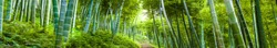bamboo forest landscape panorama