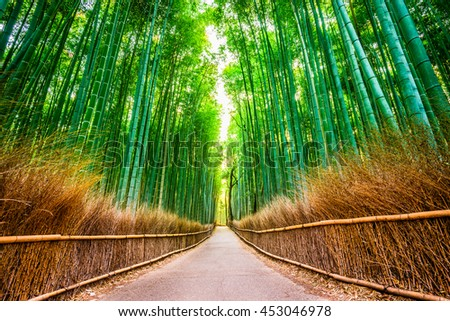 Bamboo Forest of Kyoto, Japan.