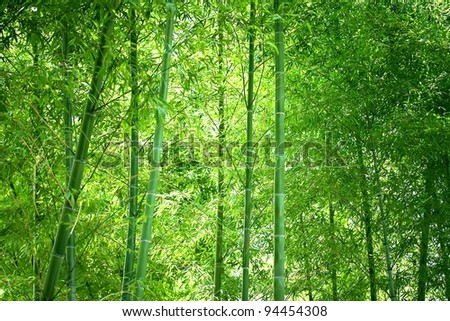 bamboo forest with light coming down in the middle.