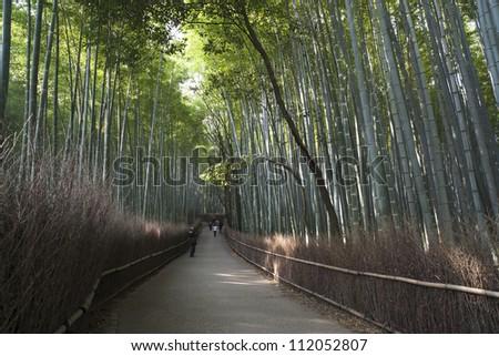 Bamboo grove in Arashiyama in Kyoto