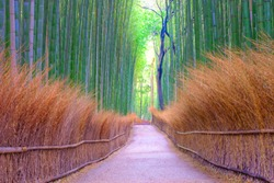 Bamboo groves public park at Arashiyama in Japan