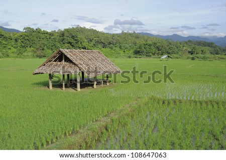 Bamboo hut in rice field