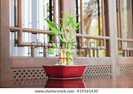 Bamboo in a pot.