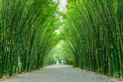Bamboo in the forest nature background