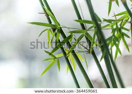 bamboo in the park