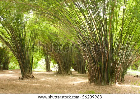bamboo in the park, green grass in the park
