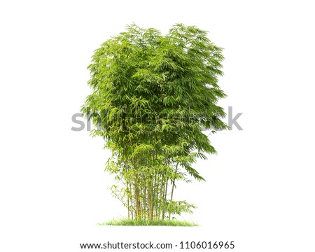 Bamboo. Isolated tree on white background. Images of high resolution bamboo tree for design or graphic work #1106016965