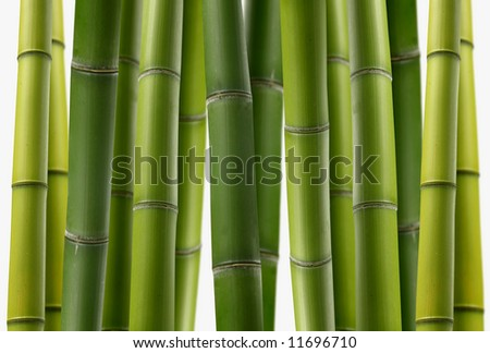 Bamboo Jungle - Vibrant Shades Of Green Stalks In A Dense Grove ...