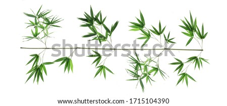 Bamboo leaf isolated on white background, Bamboo leaf texture as background or wallpaper, Chinese bamboo leaf, Photo stock ©