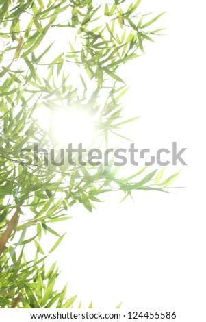 bamboo leaf on white background - stock photo