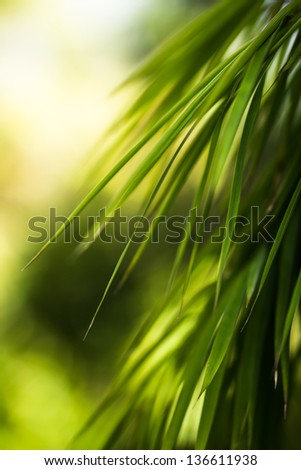 Bamboo leaf , shallow DOF - Shutterstock ID 136611938