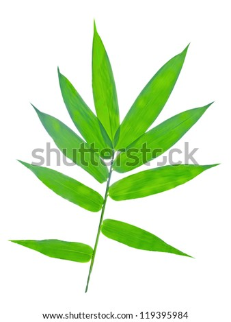 bamboo leave isolated on white background