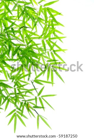 Bamboo leaves #59187250