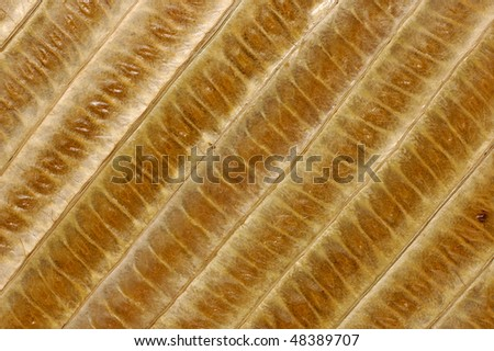 Bamboo leaves abstract organic background brown detailed natural texture