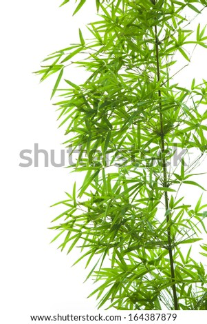 bamboo leaves collection on white background #164387879