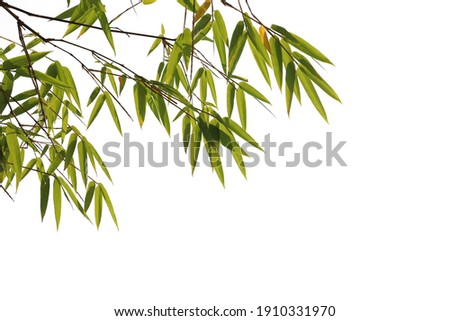 Bamboo leaves foreground isolated on white background with clipping path Stock photo ©