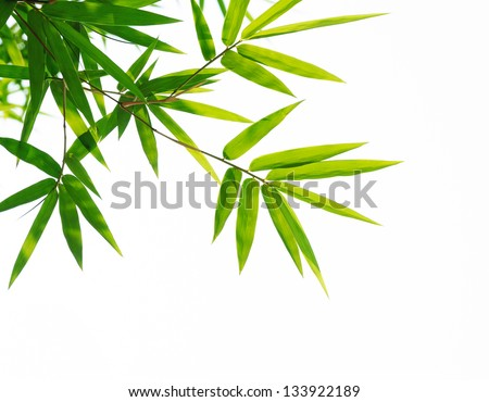 Bamboo leaves isolated on white. #133922189