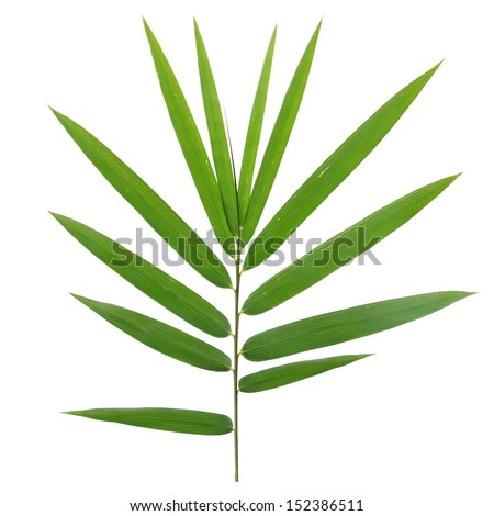 bamboo leaves isolated on white background #152386511