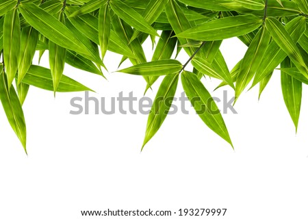 bamboo leaves isolated on white background, design for border, include clipping path #193279997