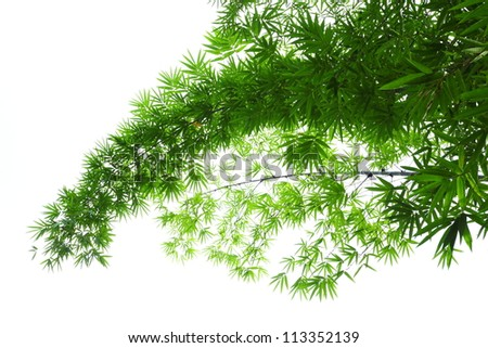 Bamboo leaves on a white background.