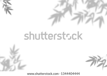 Bamboo leaves shadow on white wall Background. Abstract nature pattern. Blank copy space.