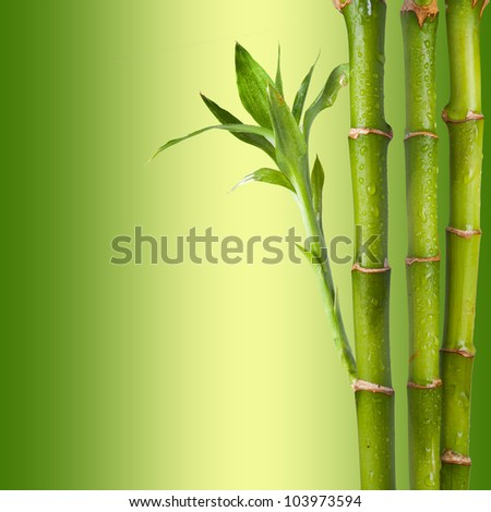 Bamboo on green and yellow background. Concept for relaxation