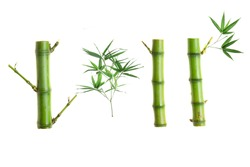 Bamboo part isolated on white background, Set or collection of green bamboo part as background or wallpaper, Closeup Chinese bamboo part