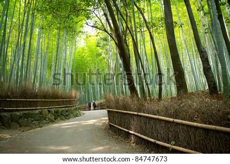 Bamboo path - stock photo