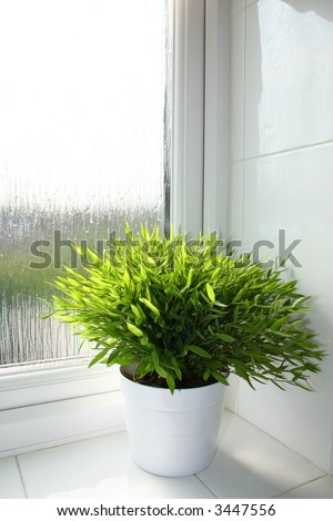 Bamboo plant in a white pot in a bathroom window sill.