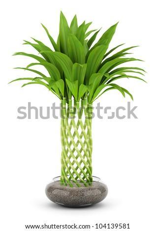 Bamboo plant in pot isolated on white background stock - Bambu cuidados en maceta ...