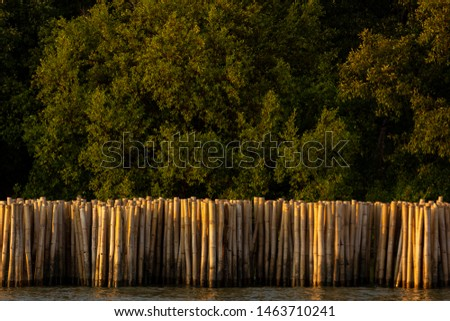 Bamboo poles are used to protect coastal erosion in coastal areas in central Thailand. #1463710241