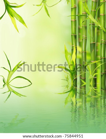 Bamboo reflected on water surface