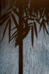 Bamboo shadow abstract on the frosted glass in the raining peroid at the night with spotlight from outside. This image  look fresh cool weather and mystery or horror feeling in the same time.
