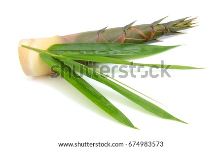 Bamboo shoot with leaf isolated on white background