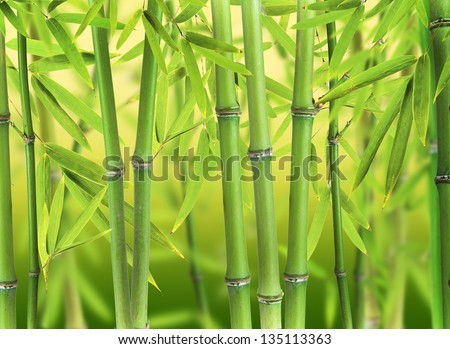 Bamboo Sprouts