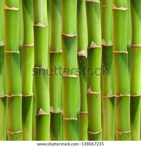 Bamboo stalks background.