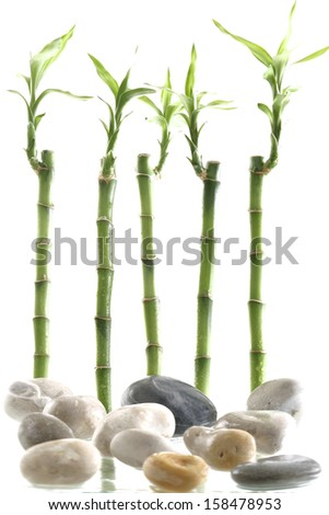 bamboo symbol of  peace and zen