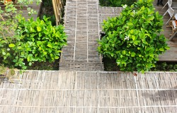 Bamboo walkway from top view, free copy space.