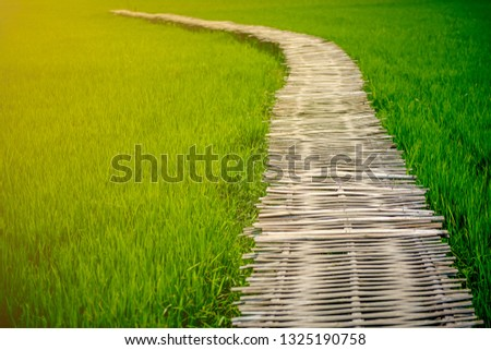 Bamboo walkway intro the rice field at countryside of Thailand #1325190758