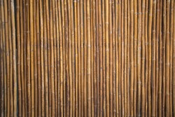 Bamboo wall or Bamboo fence texture background