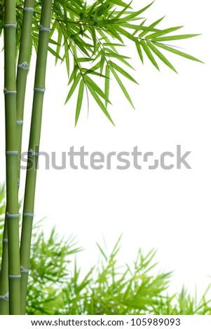 bamboo with leaves on white background with copy space - stock photo