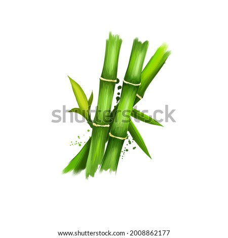 Bambusa or bamboos ayurvedic herb digital art illustration with text isolated on white. Healthy organic spa plant widely used in treatment, for preparation medicines for natural usages Zdjęcia stock ©