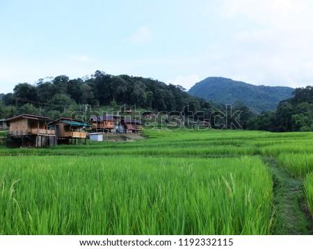 Ban Mae Klang Luang (Chom Thong), Chiang Mai/ Thailand #1192332115