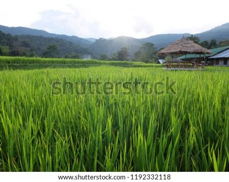 Ban Mae Klang Luang (Chom Thong), Chiang Mai/ Thailand #1192332118