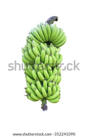 Free Photos Banana Tree With Bunch Of Bananas Plantation In