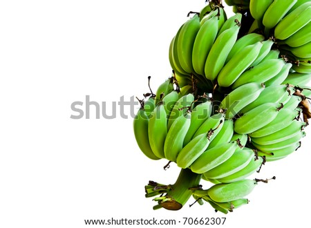 Banana bunch still green isolated in white background.
