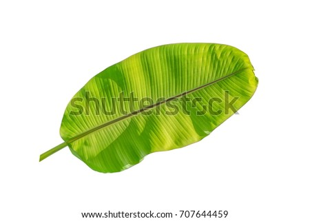 banana leaf isolated on white background. - Shutterstock ID 707644459