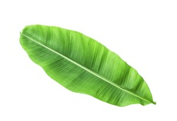 Banana leave isolated over white with CLIPPING PATH
