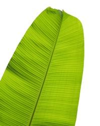 Banana leaves on white background.